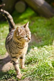 愉快的猫在阳光下 库存照片