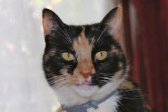 愉快的猫看与兴趣 免版税图库摄影