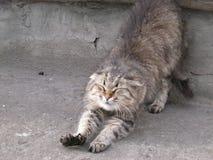 愉快的猫 库存照片
