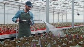 愉快的男性花匠水厂和花与一根橡胶软管自晴朗的工业温室 股票录像