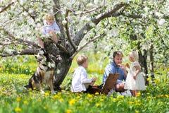 愉快的美国吃野餐午餐的家庭和狗在Flowerin下 库存图片