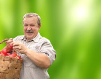 愉快的老人用在桶的苹果 免版税库存图片