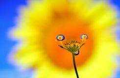 愉快的花-明亮的颜色-创造性的反射 图库摄影