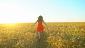 愉快的跑在麦田的旅客年轻西班牙美女在日落夏天 自由健康幸福旅游业 股票视频