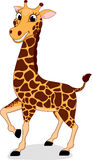 愉快的长颈鹿身分 免版税库存照片