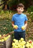 愉快的青春期前的男孩采从树的苹果 图库摄影