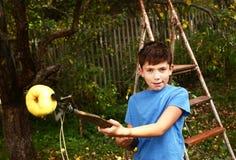 愉快的青春期前的男孩采从树的苹果 库存照片
