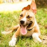 愉快的滑稽的小狗 免版税库存图片
