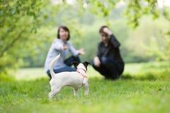 愉快的mather画象与儿子的和狗杰克罗素在夏天停放 图库摄影