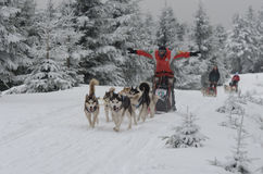 愉快的musher和他的狗sledding西伯利亚爱斯基摩人 免版税库存图片