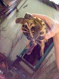 愉快的Turtoise 库存图片