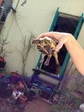 愉快的Turtoise 免版税图库摄影