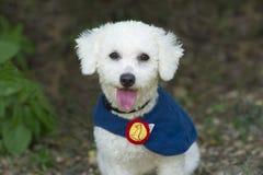 愉快逗人喜爱的狗 免版税库存照片