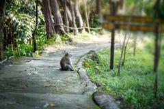 愉快长尾的短尾猿 免版税库存照片