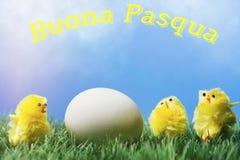 意大利人复活节问候文本;围拢鸡蛋的小组小鸡 免版税库存图片