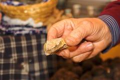 意大利块菌 免版税图库摄影