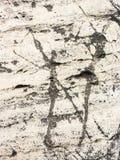 意大利房子的古老墙壁的典型的细节在里米尼,亚得里亚海的海岸的,由手被雕刻的石头做成 免版税库存照片