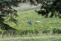 意大利托斯卡纳葡萄酒酿造 免版税库存照片