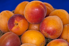 意大利杏子果子键入在Metaponto增长的不可思议的轻便小床(席子 免版税库存图片