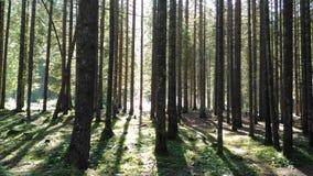 意大利森林 库存照片