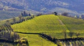 意大利横向葡萄园 图库摄影