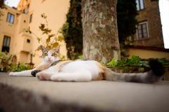 意大利猫放松在都市场面的,索伦托,意大利 免版税库存照片