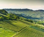 意大利葡萄园在Langhe,山麓 免版税库存图片