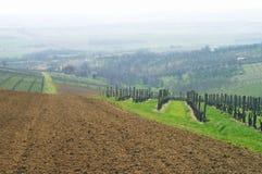 意大利葡萄园 免版税图库摄影