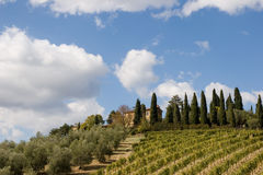 意大利葡萄园 图库摄影