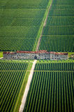 意大利葡萄园- Aereial视图 库存图片