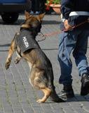 意大利警察 免版税库存图片