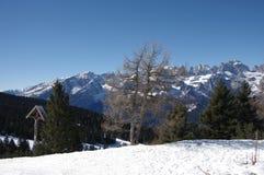 意大利阿尔卑斯andalo雪冬天6 库存照片