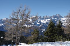 意大利阿尔卑斯andalo雪冬天5 库存图片