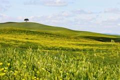 意大利,托斯卡纳横向可以 免版税图库摄影