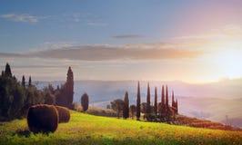 意大利 托斯卡纳农田和橄榄树;夏天乡下土地 免版税库存照片