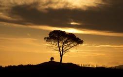 意大利 托斯卡纳 农村风景在黎明 免版税库存照片