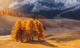 意大利 白云岩 与明亮的颜色、房子和落叶松属树的秋天风景在软的阳光下 免版税库存图片