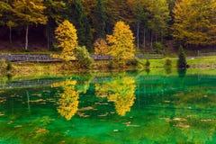 意想不到地美丽的森林 库存图片