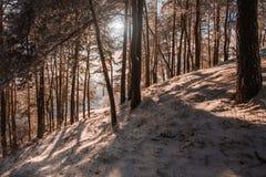 意想不到的冬天背景 免版税图库摄影
