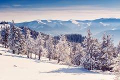 意想不到的冬天风景 库存照片