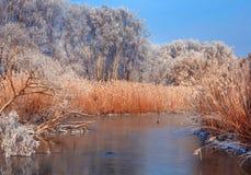 意想不到的冬天风景 免版税库存照片