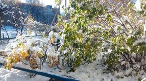意想不到的冬天 免版税库存照片