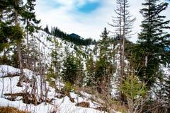 意想不到的山森林风景 库存照片