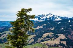 意想不到的山森林风景 免版税库存照片