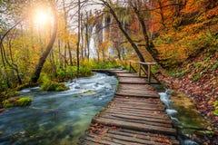 意想不到的旅游路在五颜六色的秋天森林, Plitvice湖,克罗地亚里 库存图片