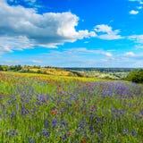 意想不到的晴天开花的小山在温暖的阳光下在夏天 免版税库存照片