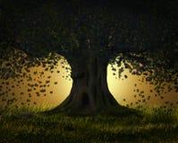 意想不到的树在晚上 免版税库存图片