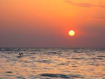 意想不到的橙色海海洋日落天际天空照片 库存图片