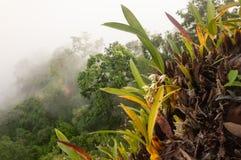 意想不到的热带森林视图,美丽的兰花在峭壁的绽放 常青森林和雾背景机盖  泰语 免版税图库摄影