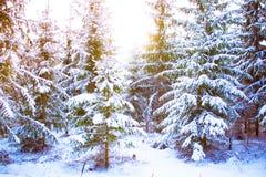意想不到的童话不可思议的风景视图圣诞树 免版税库存照片